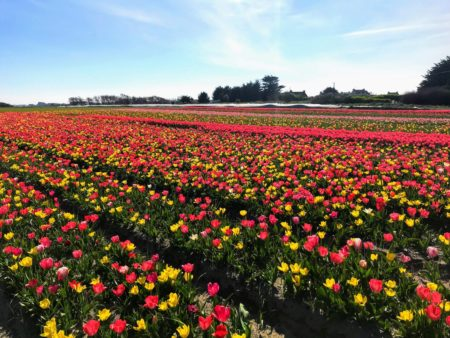 Fête des Fleurs à Plomeur en Bretagne